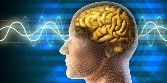 otak-manusia