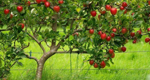 2395-menilai-pohon-dari-buahnya