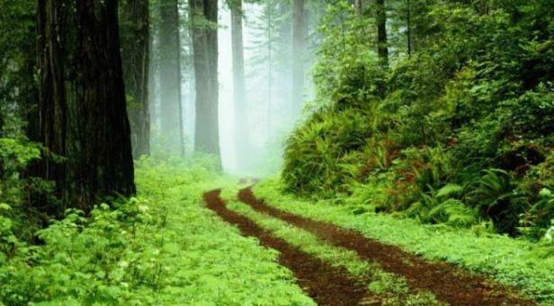 657xauto-cobalah-jalan-jalan-di-hutan-dan-rasakan-7-manfaat-dahsyat-ini-150608c