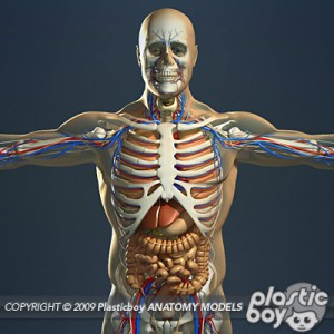 Anatomy_01