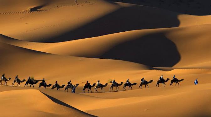 070698300_1434622909-desert-camels