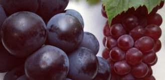 4-kyoho-grape-vs-king-dela-grape