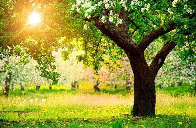 pohon-hijau-sinar-matahari