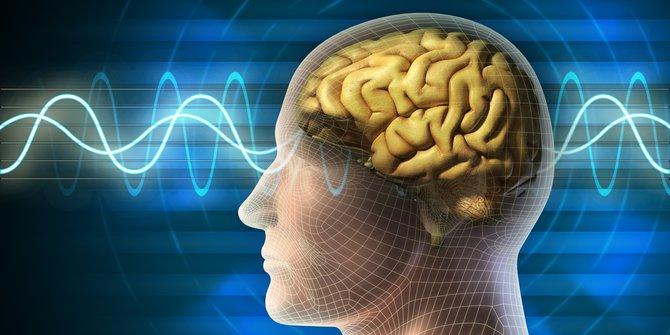 otak-organ-manusia-paling-misterius